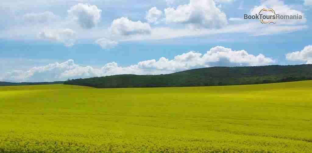 Rapeseed field in Romania